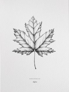 The maple leaf, create a cosy autumn feeling with this poster. High-quality digital print created from an original and hand-drawn illustration by inkylines. s hand drawn Plants - Maple leaf Drawing Sketches, Pencil Drawings, Drawing Faces, Art Drawings, Bleistift Tattoo, Maple Leaf Tattoos, Herbst Tattoo, Natur Tattoos, Realistic Eye Drawing