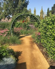 Another favorite moment from the @sunsetmag test gardens designed by Homestead Design Collective.