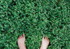 Pés na grama