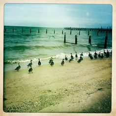 This is a Really Cool Picture taken with Hipstamatic.  (Colonial Beach, VA)