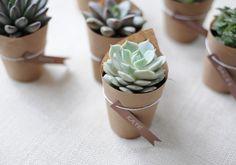 DIY Succulent Wedding Favors