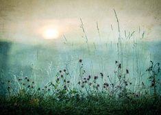 Meadow In Dawn (50x70) Gold Poster, Poster Art, Print Poster, Art Posters, Photo Pop Art, Forest Poster, Poster 40x50, Art Scandinave, Birds Flying Away