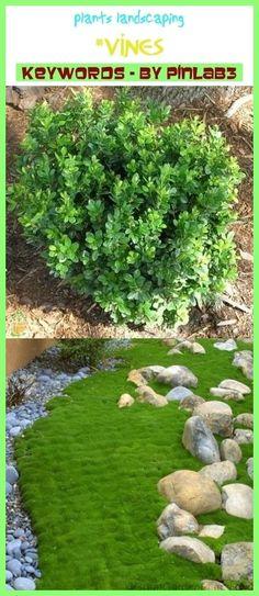 Brand New Robin Debout Décoration De Jardin