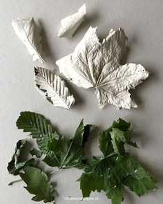 schaeresteipapier: Impressions of leaves and packaging