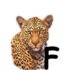 leopard-43003494949-6.jpg
