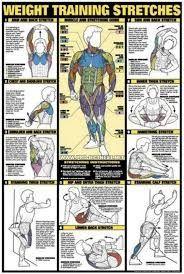 Image result for bodybuilding chart