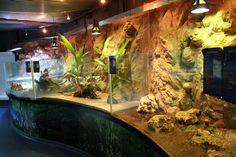 Fichier:Vivarium de l'aquarium de guadeloupe.jpg - Wikipédia