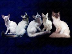My feline family ❤️