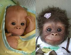 Dolls, not baby chimps, monkeys or gorillas.  These are creations by the artist, Amy Ferreira.  Assume nothing and question everything.