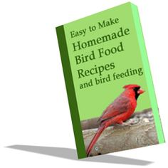 bird food recipes (but what is 'suet'?)