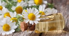 10 Miraculous Healing Uses For Chamomile Oil