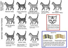 Cat COLOUR AND PATTERN CHARTS and article, very detailed