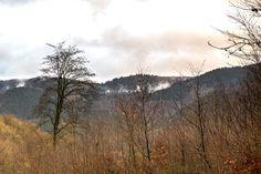 Warum in die Ferne schweifen? #harz #badlauterberg #olympus #omd #em1 #myolympus #olympusomd #naturelovers #awesome_earthpix #liveauthentic #thecreative #livefolk #mountainlove #artofvisuals #instamountain #nature_perfection #landscape_captures #ourplanetdaily #instanaturelover #ig_mountains #mountainlife #mountainaddict #welivetoexplore #mountaingram #fantastic_earth #igersmountain #meindeutschland #germanytrip #deutschland_greatshots #germanytour