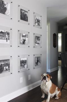 It's not that fur-fetched to believe that he's admiring his puparazzi shot 🐶 . Floating Acrylic Frame, Floating Picture Frames, Acrylic Picture Frames, Modern Picture Frames, Acrylic Frames, Floating Wall, Gallery Wall Frames, Frames On Wall, Modern Gallery Wall