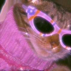 Pink Tumblr Aesthetic, Cat Aesthetic, Aesthetic Indie, Bad Girl Aesthetic, Purple Aesthetic, Aesthetic Collage, Baby Animals Pictures, Cute Animal Photos, Cute Little Animals