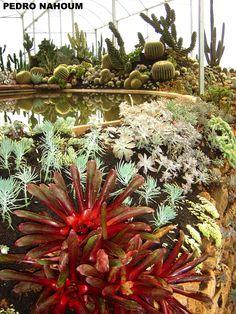 Nidularium sp. Fazenda das Flores BOTANICA POP 2008