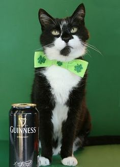 st pats cat with Guinness