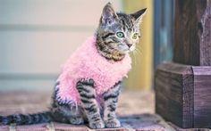 壁紙をダウンロードする キティ, 華やかなキティ, ピンク色のちゃんちゃんこ