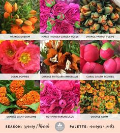 Mayesh Cooler Picks - Spring - Pink + Orange // Products: |1| Orange dubium, Maria Theresa garden roses, orange parrot tulips |2| Coral poppies, orange fritilaria imperialis, coral charm peonies |3| Orange giant coxcomb, hot pink ranunculus, orange geum