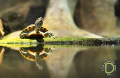 I'm in love with turtles! - ADO Productions