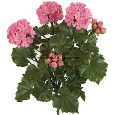 """16"""" UV-Proof Outdoor Artificial Geranium Flower Bush -Pink (116.310 CLP) ❤ liked on Polyvore featuring home, outdoors, outdoor decor, outdoor patio decor, outside garden decor, flower stem and outdoor garden decor"""