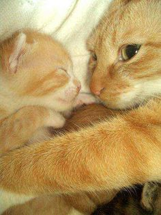 Mother and her kitten - Imgur