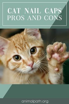 Are you contemplating getting nail caps for your cat? Find out the pros and cons. Cat Nail Caps, Soft Nails, What Cat, Christmas Colors, Friends In Love, Cats And Kittens, Kitty, Nail Art, Pets
