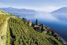 Active Travels: Visiting Lake Geneva's Lavaux Wine Region Lake Geneva Switzerland, Switzerland Tour, Vevey, Oh The Places You'll Go, Places To Travel, Places To Visit, Swiss Travel, Cinque Terre Italy, Europe