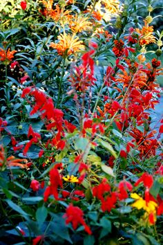 red yellow orange gardens - Google Search
