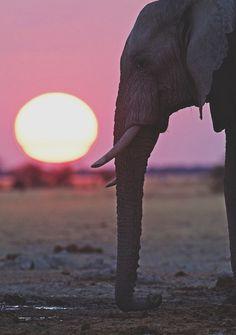 elephant at dusk ✌eace   H U M A N™   нυмanACOUSTICS™   н2TV™