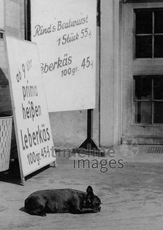 Metzgerschilder in München, 50er Jahre Stöhr/Timeline Images #black #white #schwarz #weiß #Fotografie #photography #historisch #historical #traditional #traditionell #retro #vintage #nostalgic #Nostalgie #München #Munich #50er #1950er #Stimmung #Atmosphäre #Mittagspause #entspannen #relaxen #Nickerchen #Mittagsschlaf #Metzger #Schild #Werbeschild #Werbeplakat Timeline Images, Metzger, Petra, Retro Vintage, Lunch Bags, The Fifties, Mood, Traditional, Monochrome