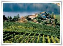 Vineyards in the Okanagan