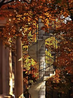 Autum leaves with beautiful spiral staircase
