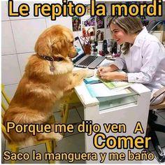 Animals And Pets, Funny Animals, Spanish Jokes, Bad Memes, Marvel Memes, Animal Memes, Funny Images, Dog Love, Dogs