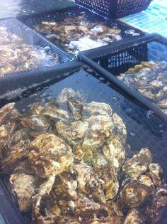 Pour les amateurs de fruits de mer sortis de l eau