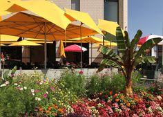 Edible Flowers, Patio, City, Outdoor Decor, Home Decor, Decoration Home, Room Decor, Cities, Home Interior Design
