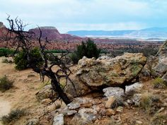 Tree, Ghost Ranch, Northern New Mexico, by Caitlin Harper