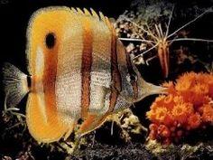 Tropical Fish Keeping
