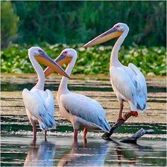 Beautiful Landscapes, Birds, Bird
