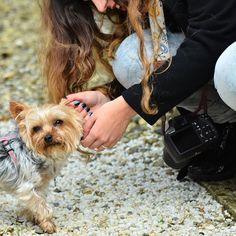 Mi pequeña Xani la perrita más bonita de #Galicia !! Foto de @chanoamado de @enfocagalicia  by lvdclaudia