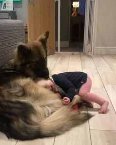 """I love you, dog."" - cut , funny dogs and cats - Animals Pictures Cute Funny Animals, Cute Baby Animals, Funny Dogs, Animals And Pets, Cute Puppies, Cute Dogs, Cute Babies, German Shepherd Dogs, Baby German Shepherds"