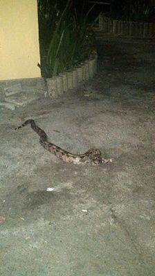 Cobra em motel da Avenida Brasil acaba com a empolgação de casal +http://brml.co/1BXQL3K