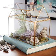 Glass display box terrarium