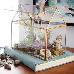 Glass display box terrarium