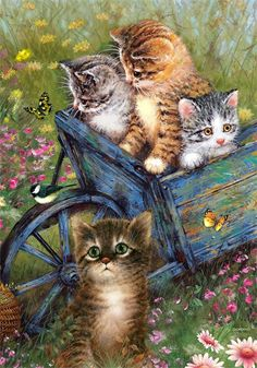 Barrow full of Kittens