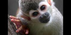 Miradas del reino animal que atrapan en el #Zoológico de  #Cali  #OrgullodeCali  #CaliCo