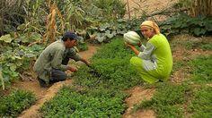 A Brachoua au Maroc un village s'en sort grâce à la permaculture et retrouve une vie digne