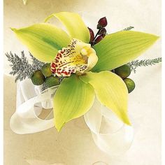 Cattleya orchid corsage with ribbon