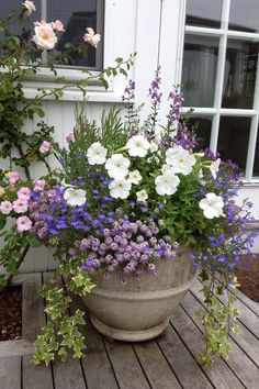 delightful container design by Megan Soverino garden pots color combos Container Flowers, Container Plants, Container Gardening, Gardening Vegetables, Flower Gardening, Organic Gardening, Gardening Tips, Container Design, Cheap Landscaping Ideas