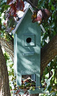 Feathered friends Bed and Breakfast!